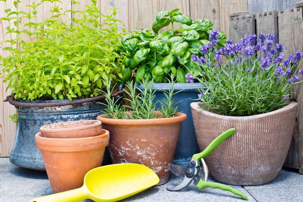 Coltivare sul balcone le erbe aromatiche