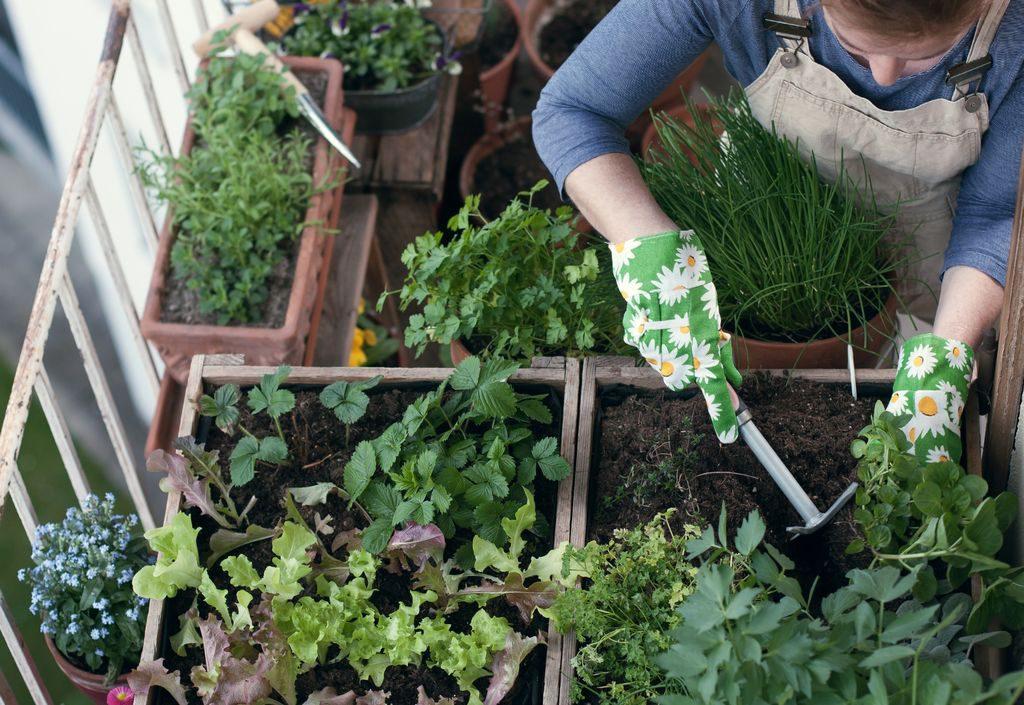 Cosa coltivare sul balcone: frutta, verdura ed erbe aromatiche