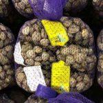 Carrefour richiama vongole lupini (Chamalea Gallina) per Escherichia coli